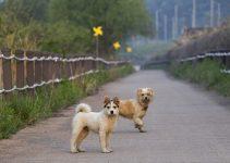 Best Wireless Electric Dog Fence